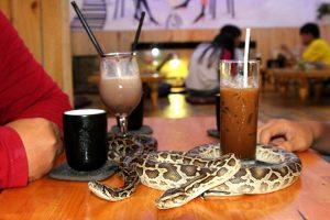 ý tưởng mở những quán cafe độc đáo