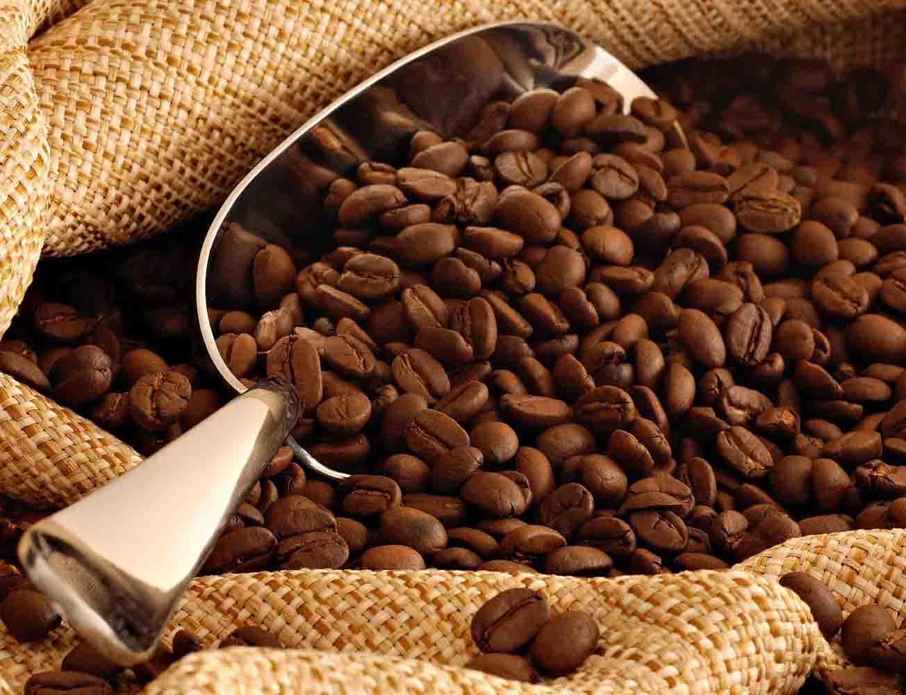 cung cấp cafe hạt