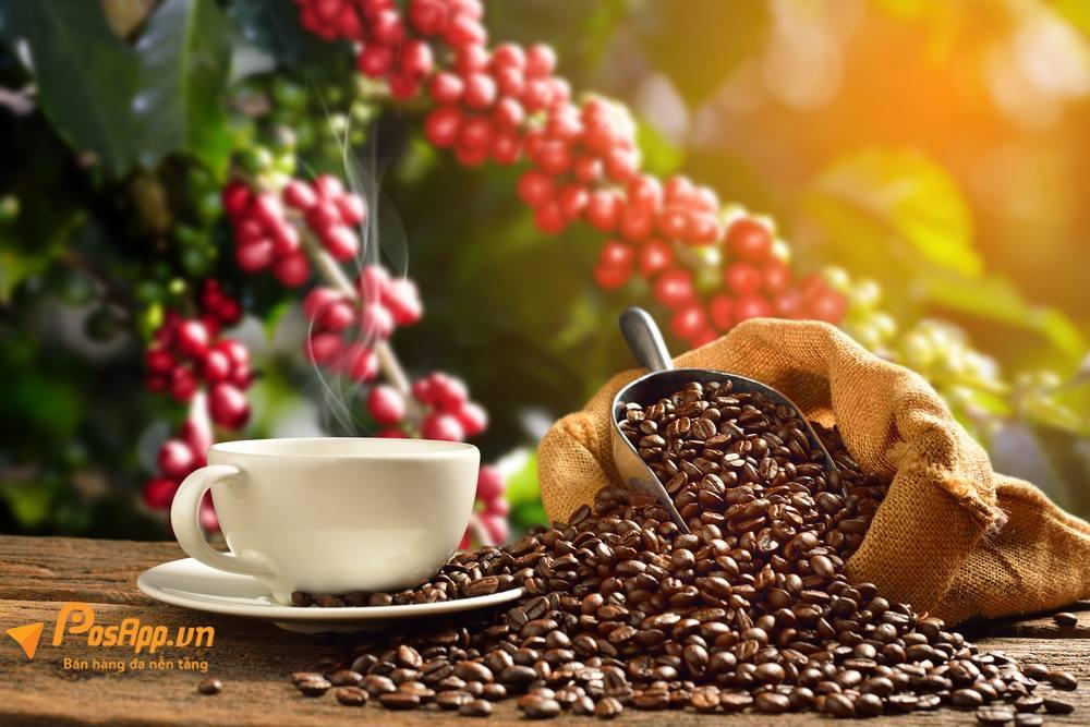 nơi phân phối cafe