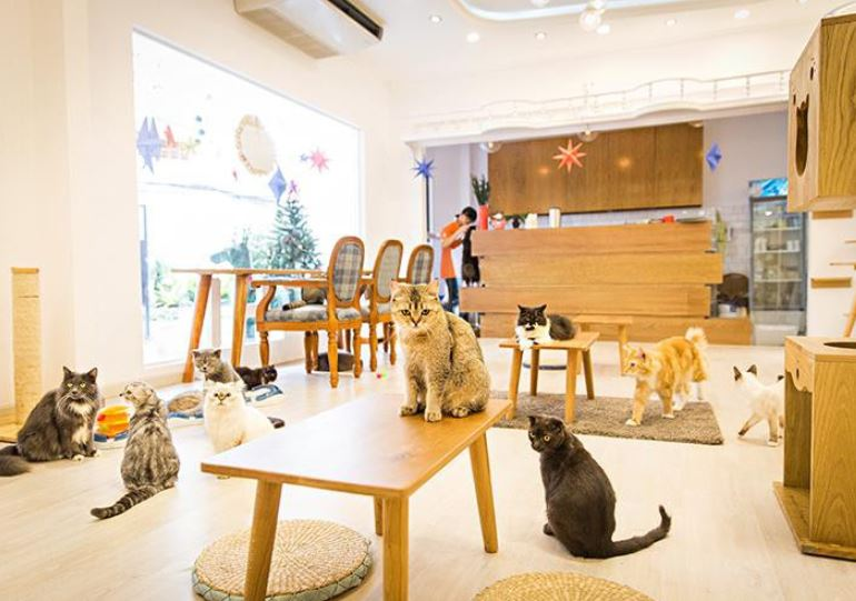 cafe mèo cafe thú cưng