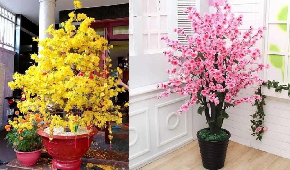 hoa mai hoa đào