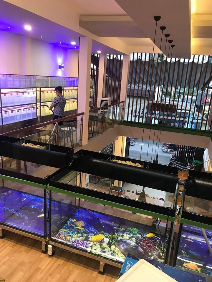 không gian cafe siêu thị cá cảnh