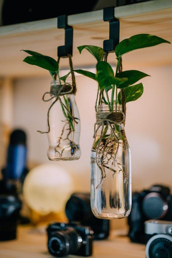 chai thủy tinh trồng cây