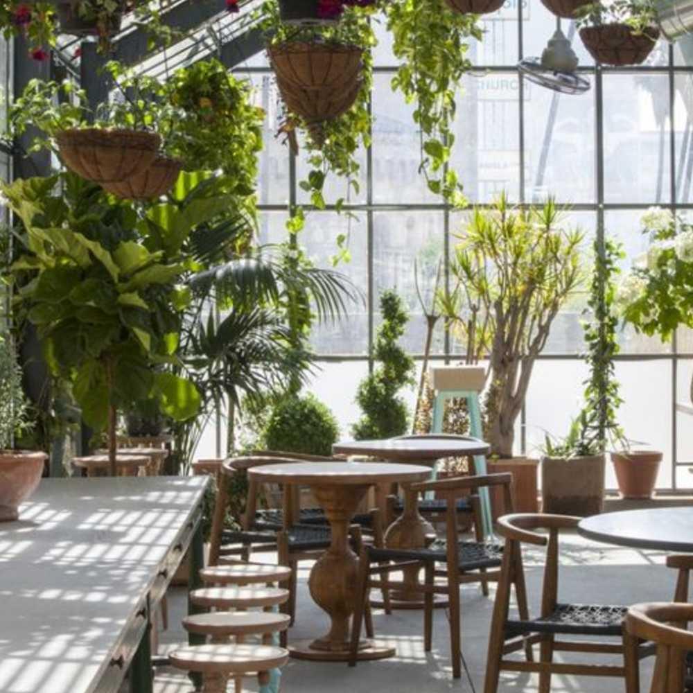 trang trí quán cafe bằng cây cối