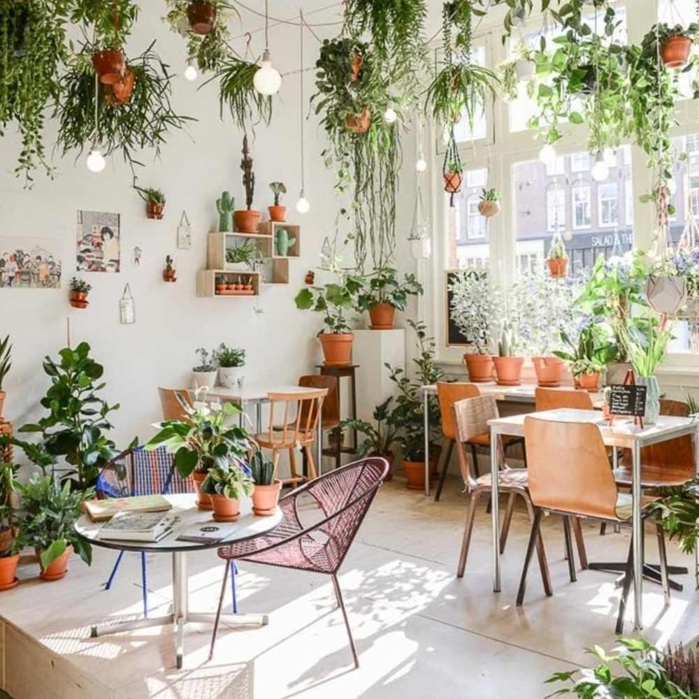 trang trí quán cafe bằng cây tươi mát