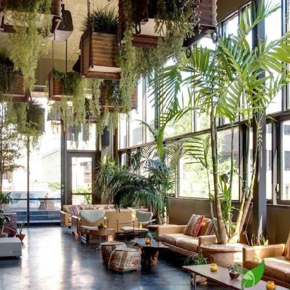 trang trí quán cafe bằng cây xanh